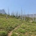 Old Summit Lake Trail.- Three Fingered Jack Loop