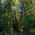 Tall trees surround the campground.- Cresap Bay Recreation Area Campground