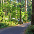 Thick forest among the campsites.- Cresap Bay Recreation Area Campground