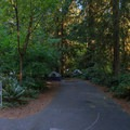 Typical campsite.- Cresap Bay Recreation Area Campground