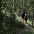 Aspen section near the trailhead. - Mineral Licks Trail