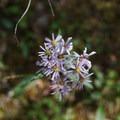 Wildflower blooms.- Mineral Licks Trail