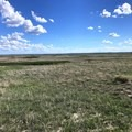 To the south just a few hundred meters from the game trail is Buffalo Gap National Grassland.- Deer Haven