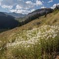 Wildflowers along the trail.- Matterhorn Peak