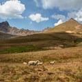 Sheep herd at the base of Matterhorn (right) and Wetterhorn (left).- Matterhorn Peak