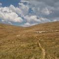 Sheep herd crowding the trail.- Matterhorn Peak