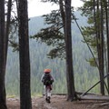 Heading back down to the trailhead through a large stand of lodgepole pines.- Deer Lake