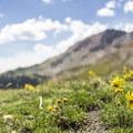 Wildflowers along the trail.- Cross Mountain Trail