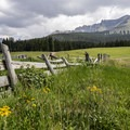 San Juan Mountains meadow.- Galloping Goose Trail