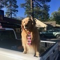 Mayor Max is the actual mayor of Idyllwild. Be sure to meet him while you're in town!- Pacific Crest Trail: California Section B