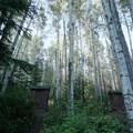 Boreal forest setting.- Andy Bailey Regional Park Campground