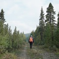 Hiking an old section of the Alaska Highway.- The Cut Trail