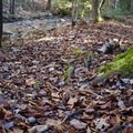 Fall leaves often cover the trail and hide slippery rocks. - Seven Tubs