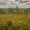 One of the many open heath bogs of Dolly Sods along the hike. - North Dolly Sods Loop from Bear Rocks Trailhead