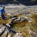 The tide pools hold all kinds of life. - Coasteering on Sangster Island