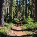 The trail begins through a thick, classic Oregon forest of ponderosa pines, western larches, and Douglas firs.- Middle Sister: West Approach