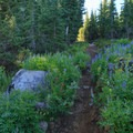 Abundant wildflowers along the Glacier Way Trail.- Middle Sister: West Approach