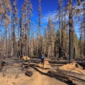 A hiker marvels at the scorched forest from a wildfire that burned in summer, 2017.- Middle Sister: West Approach