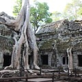 Jungle overtaking the ruins at Ta Prohm.- Ta Prohm Temple