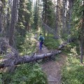 The trail gets steeper. - Bow Peak via Crowfoot Glades