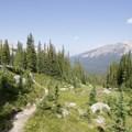 Up into the alpine toward Bow Peak.- Bow Peak via Crowfoot Glades