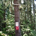 Signs along the Bohemia Mountain Trail in the Umpqua National Forest. - Bohemia Mountain Trail