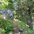 The Bohemia Mountain Trail in the Umpqua National Forest. - Bohemia Mountain Trail