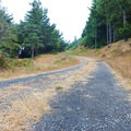 Portions of the asphalt road have decayed and become a double track service road.- Fern Trail