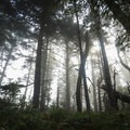 Foggy forest mornings at the recreation area.- Tseriadun State Recreation Area