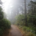Foggy hikes inside Tseriadun State Recreation Area.- Tseriadun State Recreation Area