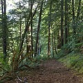 At the higher elevations, the trail passes through scenic forest. - Humbug Mountain Trail