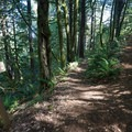 The eastern and western trail forks meet just beneath the summit of the trail.- Humbug Mountain Trail