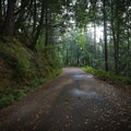 The Fern Trail gives hikers a chance to walk along a disused portion of old Highway 101 as it climbs and wraps around a mountain.- Humbug Mountain State Park