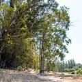 Plenty of shade is available throughout most the trail system on Orcutt Hill.- Orcutt Hills Trail