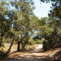 The trails through Orcutt Hill vary in difficulty, size, and maintenance; however, many of them are similar to this, making any activity an option. - Orcutt Hills Trail