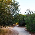 A small network of trails loops around the park, allowing you to spend as much or as as little time as you like.- Nipomo Native Garden Loop