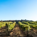 Most of the ride is beside agriculture and vineyards.- Foxen Canyon Cycle + Wine Tour
