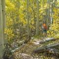 Fall colors along the Capitol Creek Trail.- Capitol Peak