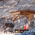 Keep an eye out for deer crossings! Also, the park staff set water stations throughout the trails every morning.- Los Flores Ranch Park