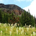 Bear grass, one of northwest Montana's most iconic native plants, grows prolifically along the first half of the trail. In late June and July, the blooms are lovely.- Triple Divide Peak