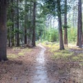 The trail passes through a forest.- Glen Aulin High Sierra Camp to Waterwheel Falls