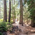 A hiker walking through a wooded section of the trail.- Glen Aulin High Sierra Camp to Waterwheel Falls