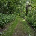 A typical hiking trail in Fort Ridgely State Park.- Fort Ridgely State Park