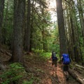 The Lilly Basin trail travels through thick forest initially.- Goat Rocks Thru-hike