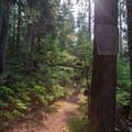 Entering the Goat Rocks Wilderness Area via the Lilly Basin Trailhead- Goat Rocks Thru-hike