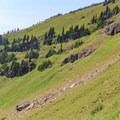 The southern slope of Johnson Peak is covered in lush meadows.- Goat Rocks Thru-hike