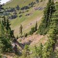 Sparse subalpine trees occupy the terrain as the trail climbs the southern Johnson Peak cirque.- Goat Rocks Thru-hike