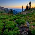 Lush wildflowers creekside in the south Johnson Peak cirque meadow.- Goat Rocks Thru-hike