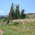 A typical campsite along the PCT above the Snowgrass Flat trail junction.- Goat Rocks Thru-hike