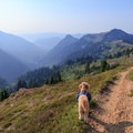 Dogs are welcome in the Goat Rocks Wilderness.- Goat Rocks Thru-hike